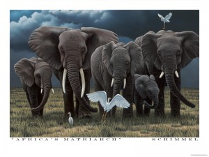 Africa's Matriarch - Poster