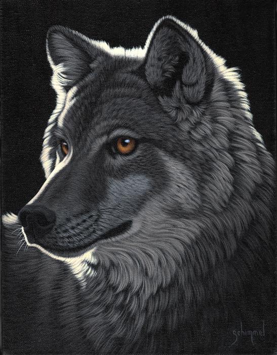 Night Wolf Schim Schimmel